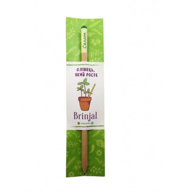 Pencil Brinjal with seeds Salad