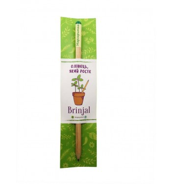 Pencil Brinjal with seeds Daisy