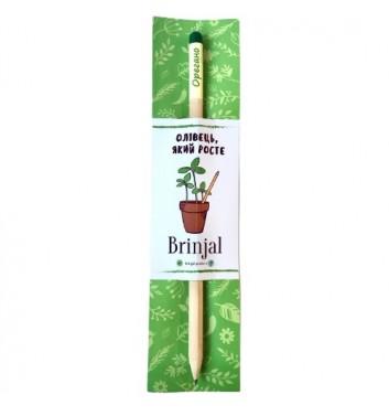 Eco stick Brinjal: олівець з насінням Орегано